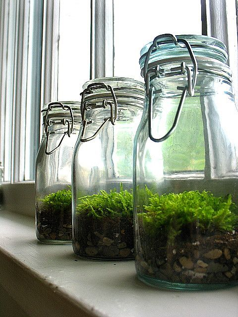 Moss In Jars Terrarium, Love These!! Jars Can Be Found In Ikea