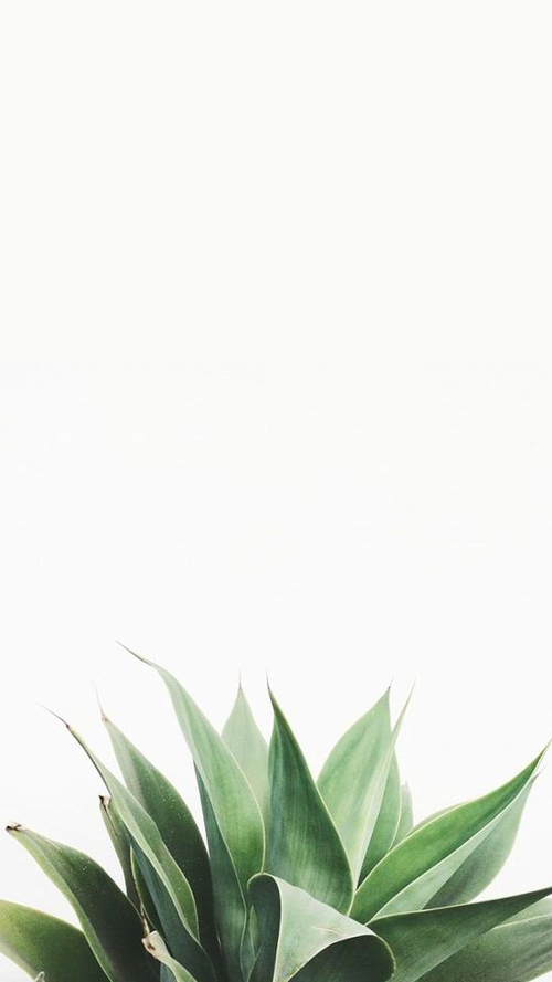 Kartinka Najdeno Polzovatelem Sydney Blackwell Nahodite I Sohranyajte Svoi Sobstvennye Izob Plant Wallpaper White Wallpaper For Iphone Succulents Wallpaper