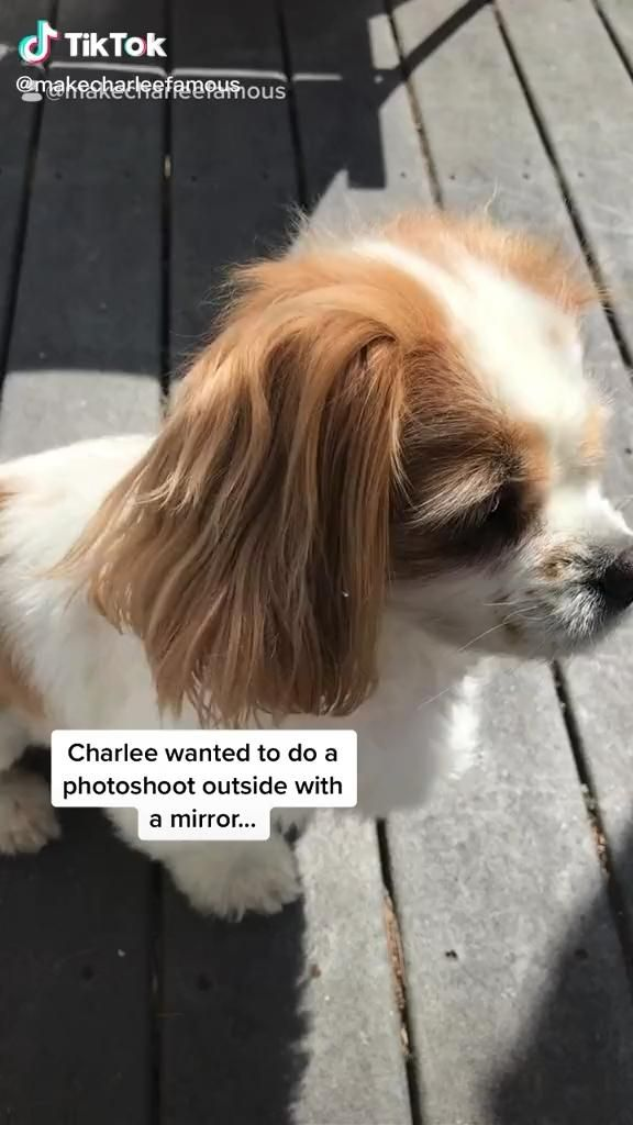 This Dog Snapped Video Cute Dogs And Puppies Dogs Dog Names