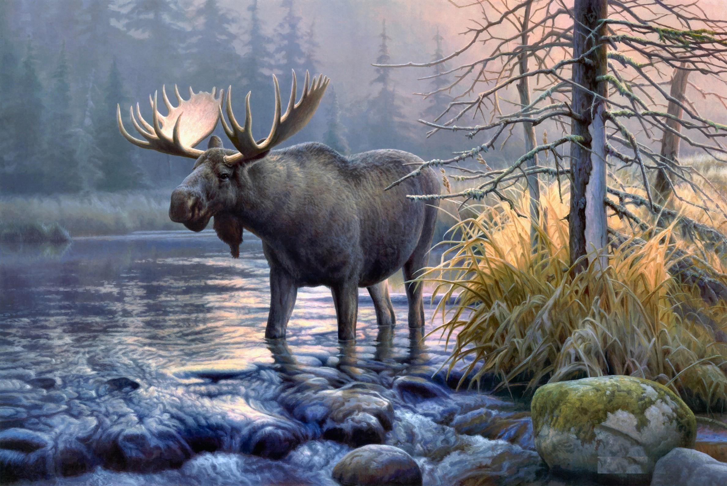 Moose HD Wallpapers Moose Desktop Pictures Cool