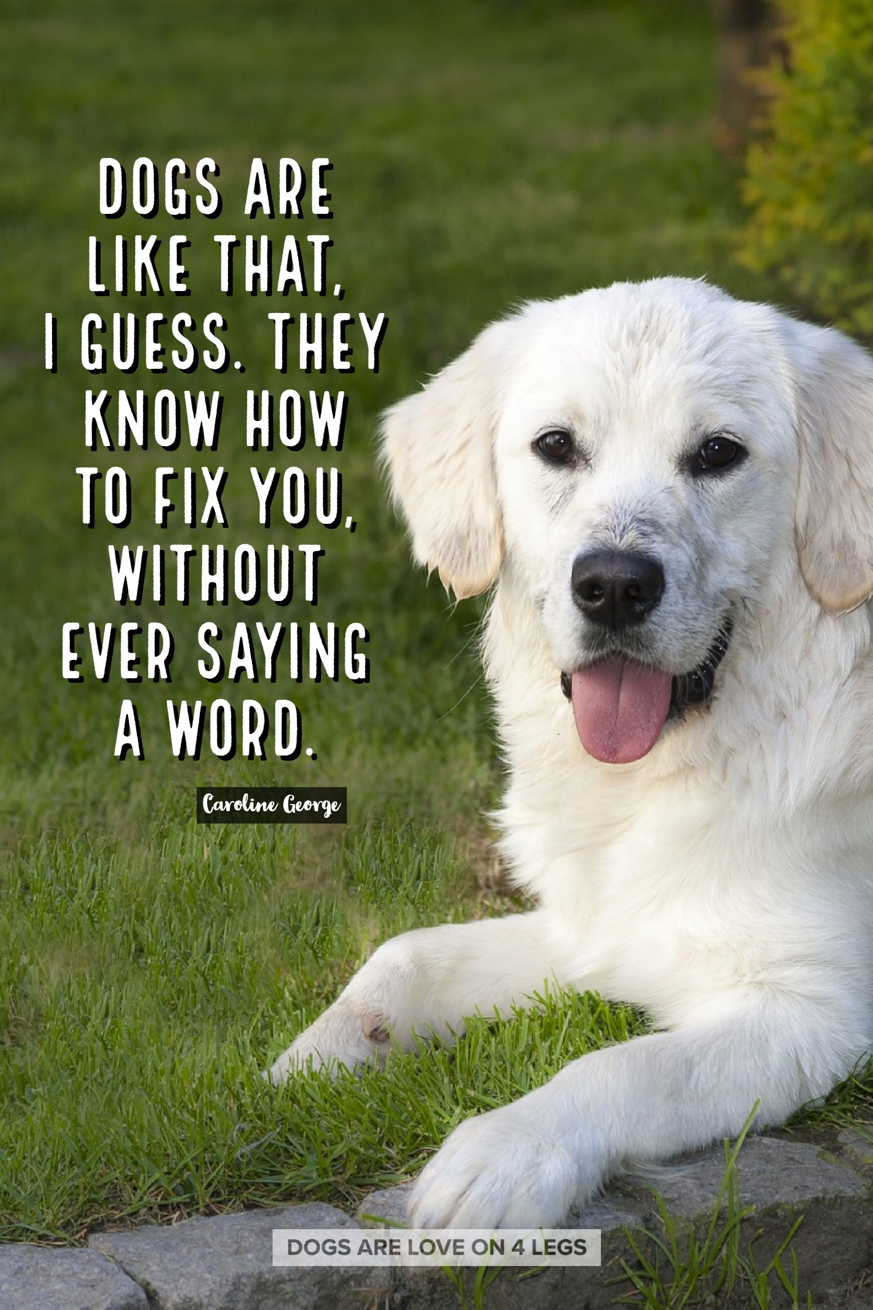 Quotes For Dogs 3