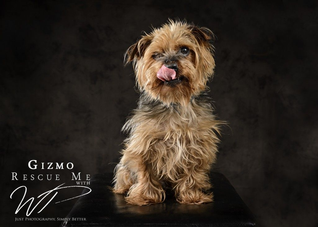 Rescue Me With Wp Jerry Green Dog Rescue Wp Studio Dog