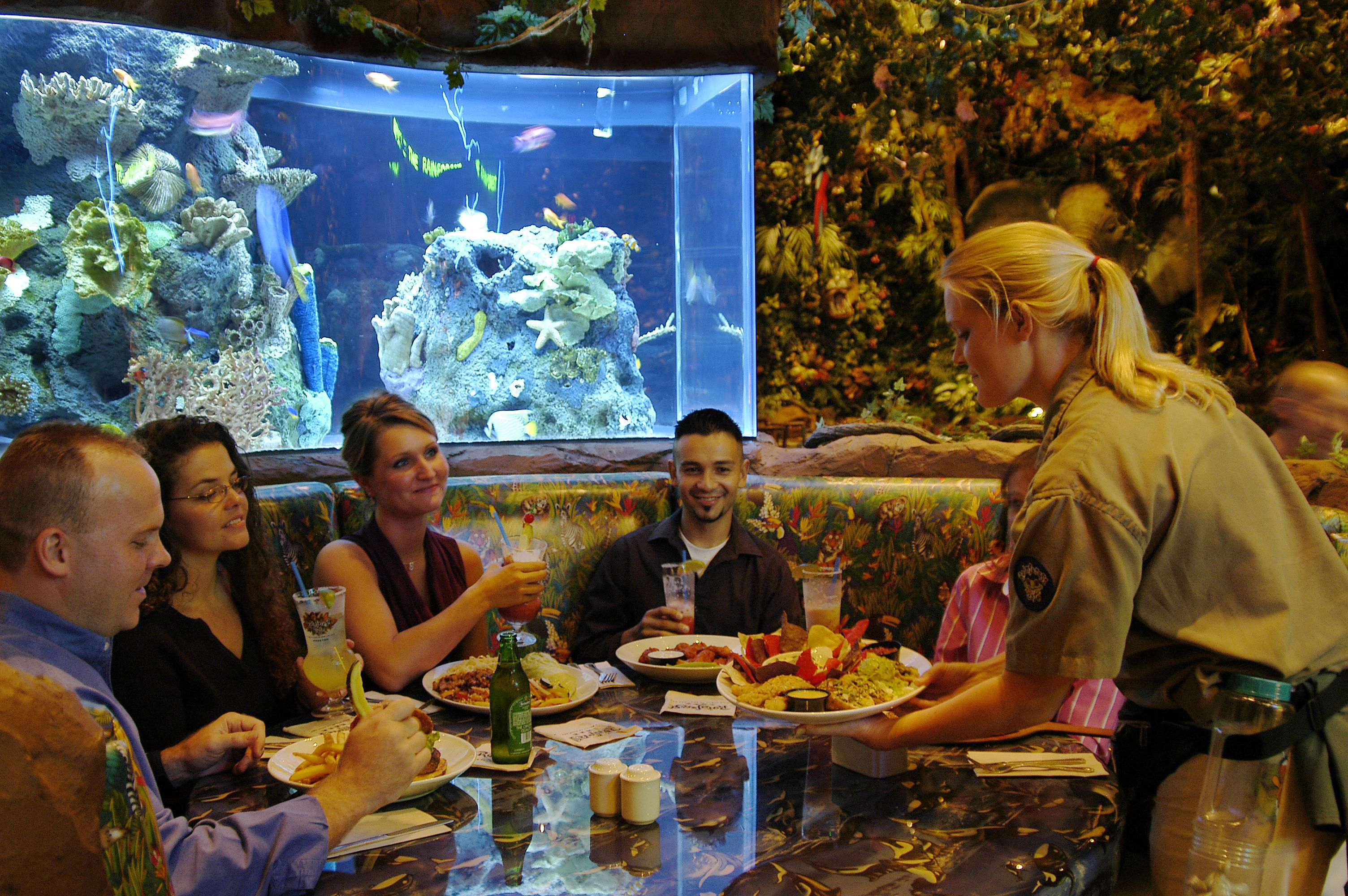 Our Safari Guides know everything about The Rainforest Café. | The ...