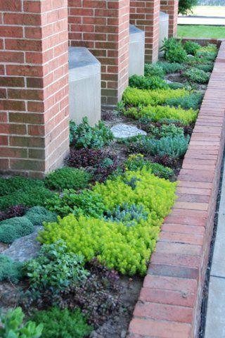 Sedum Garden Design Sedum Garden Succulent Landscaping Succulent Landscape Design