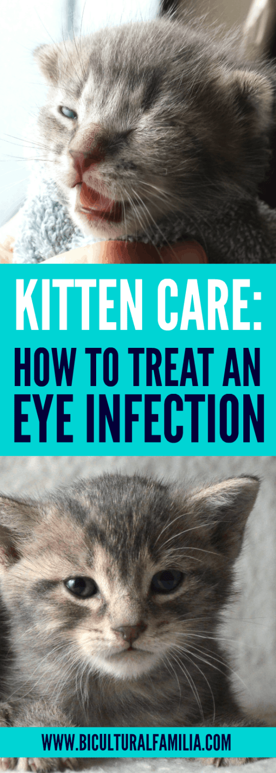 How To Treat An Eye Infection In A Kitten Bicultural Familia In 2020 Kitten Eye Infection Kitten Eyes Eye Infections