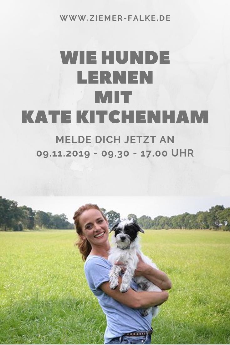 Wie Hunde Lernen Seminar Kate Kitchenham Bei Mit Bildern Lernen Kate Kitchenham Erziehung