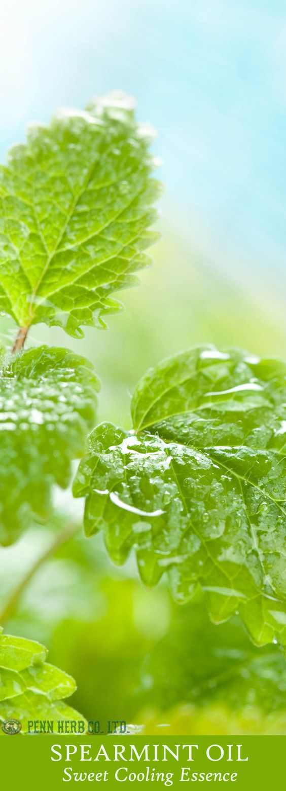 SPEARMINT OIL…Chill out with the cooling essence of this sweet mint. Its pure essential oil refreshes the body, especially on hot, humid days. Simply add several drops to water for a cooling body bath or foot wash.