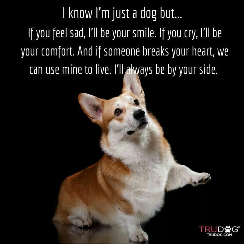 Awwwww Corgi Dog Corgi Dog Quotes