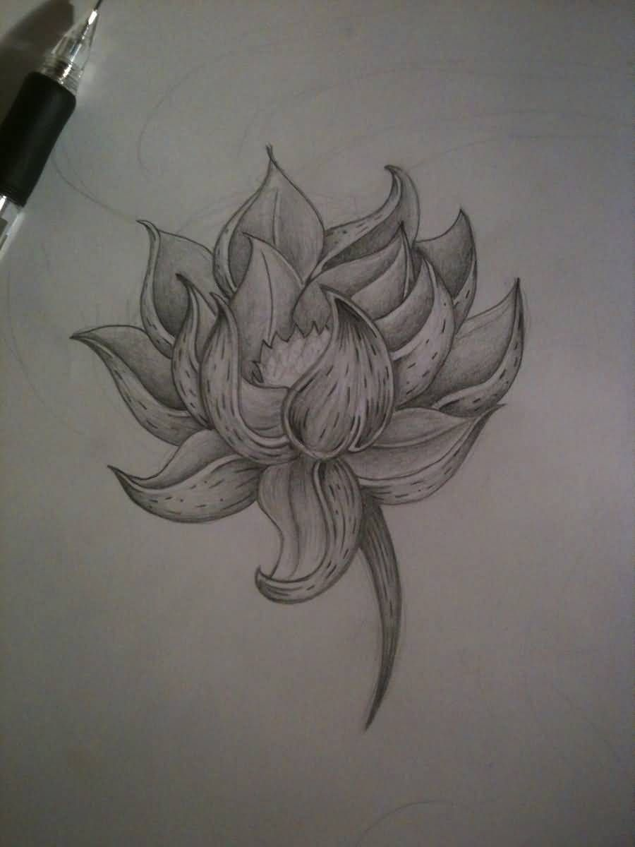 Black and white lotus tattoo want pinterest white lotus black and white lotus tattoo izmirmasajfo