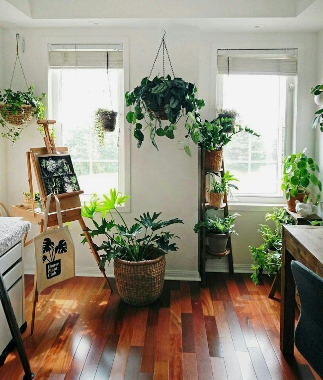 27 Interior Design Plants Inside House Pictures Plant Decor Interior Design Plants House Plants Decor