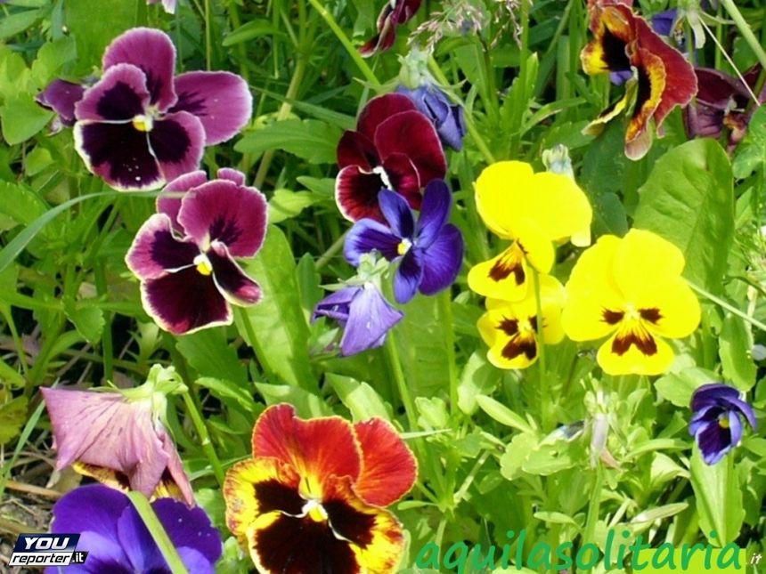 flores plantar primavera - Buscar con Google | Flores | Pinterest ...