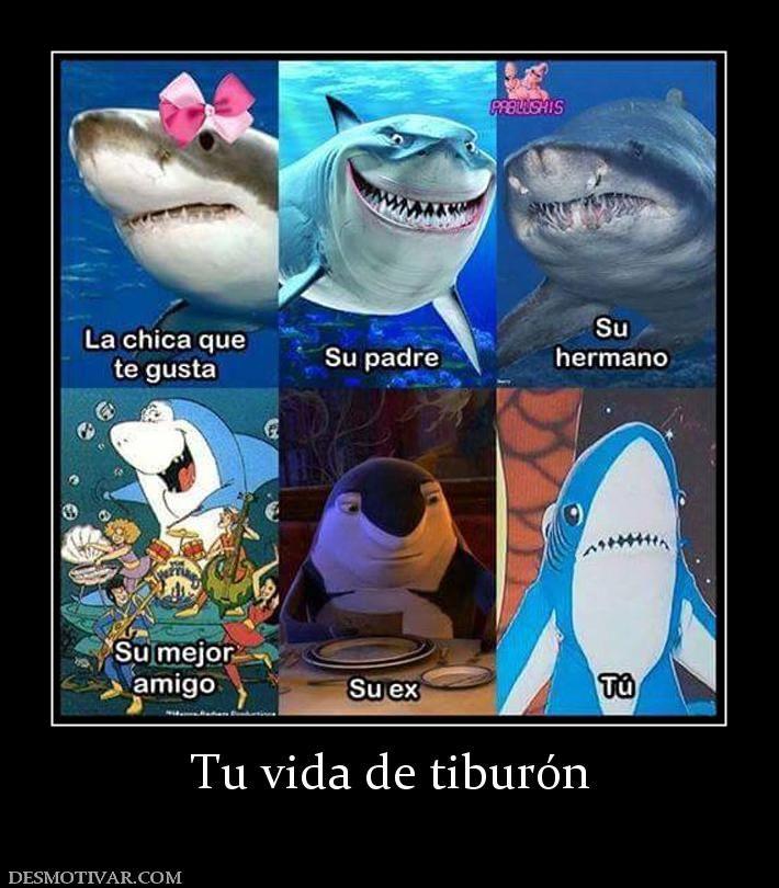 Desmotivaciones Tu Vida De Tiburon Spanish Memes Memes Humor