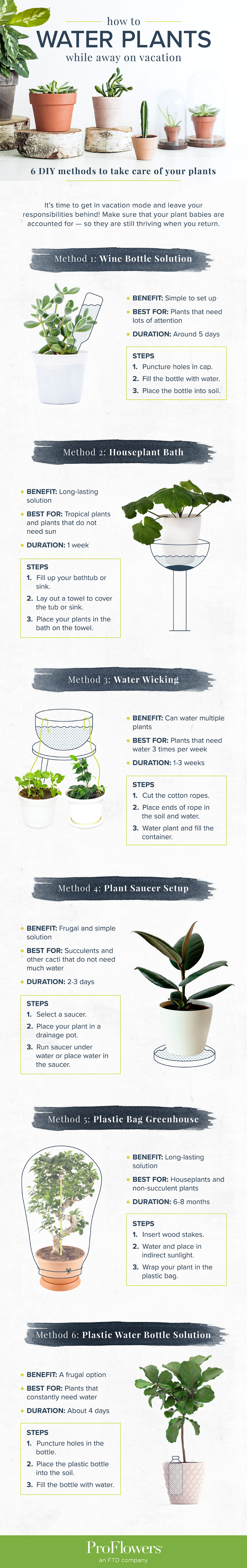 How to Water Plants While Away 20 DIY Methods   ProFlowers Blog ...