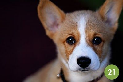 I have too many friends who are obsessed with corgis to not love this.
