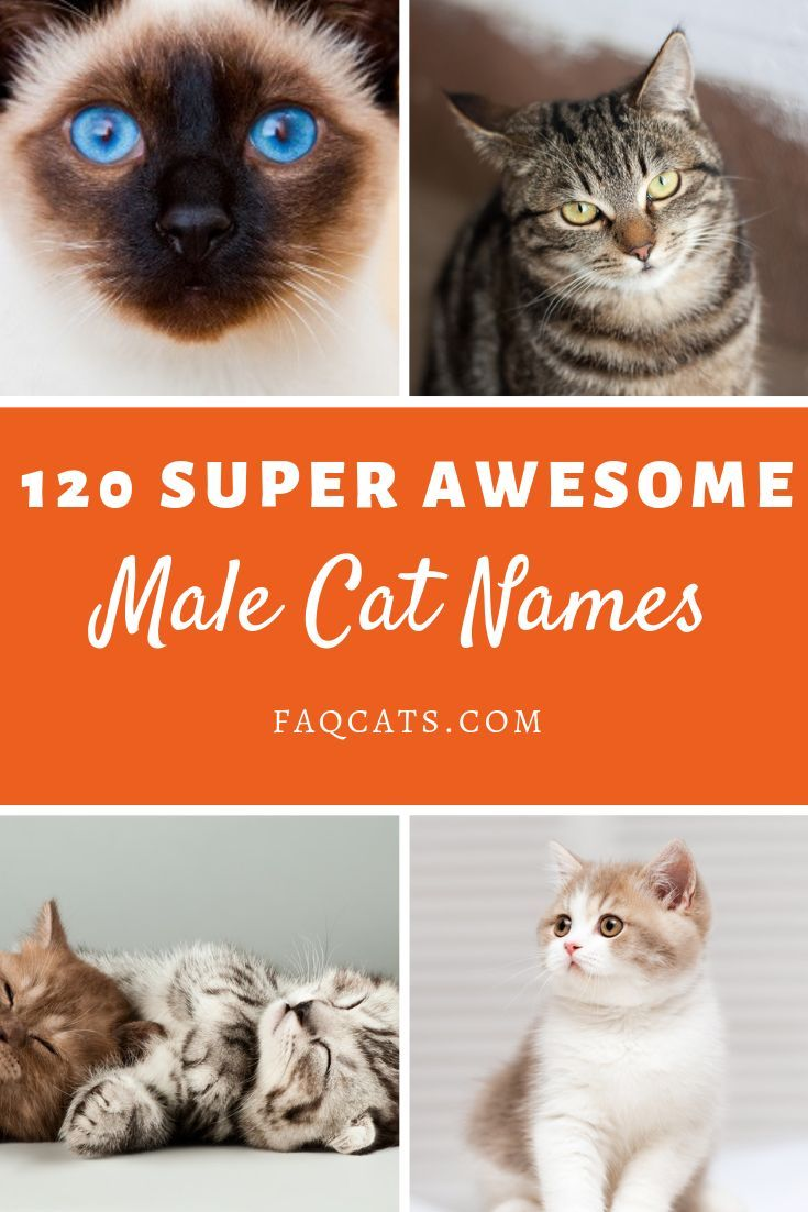 118 Male Tabby Cat Names Funny cat names, Tabby cat