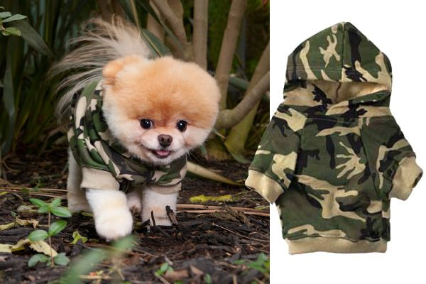 Download Puppies Army Adorable Dog - 35666d4e98581d1ccfcc887b07236b00  Picture_72624  .jpg