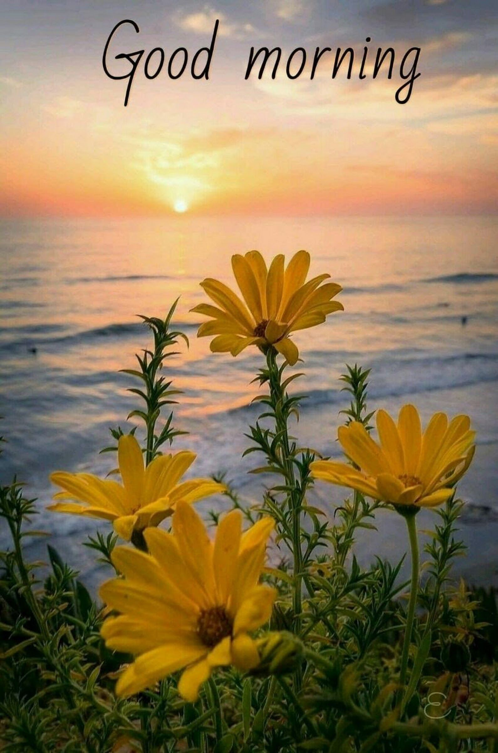 Good Morning Greetings Saudaes Pinterest Dil Se Night