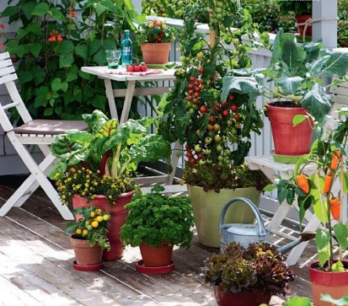 balcony vegetable garden apartment - Vegetable Garden Ideas For Apartments