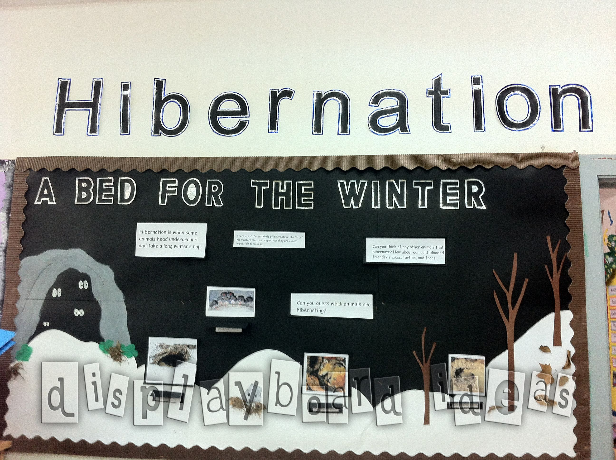 Hibernation Bullitan Boards