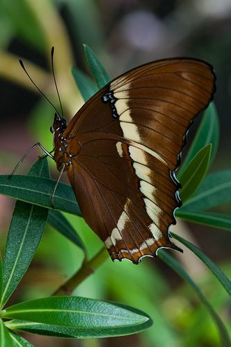 """""""Brown Beauty"""" ~ Photography by Janet Little Jeffers ♥"""