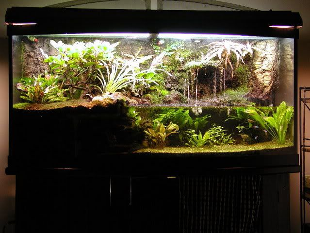 Paludarium for Poison Dart Frogs Casas