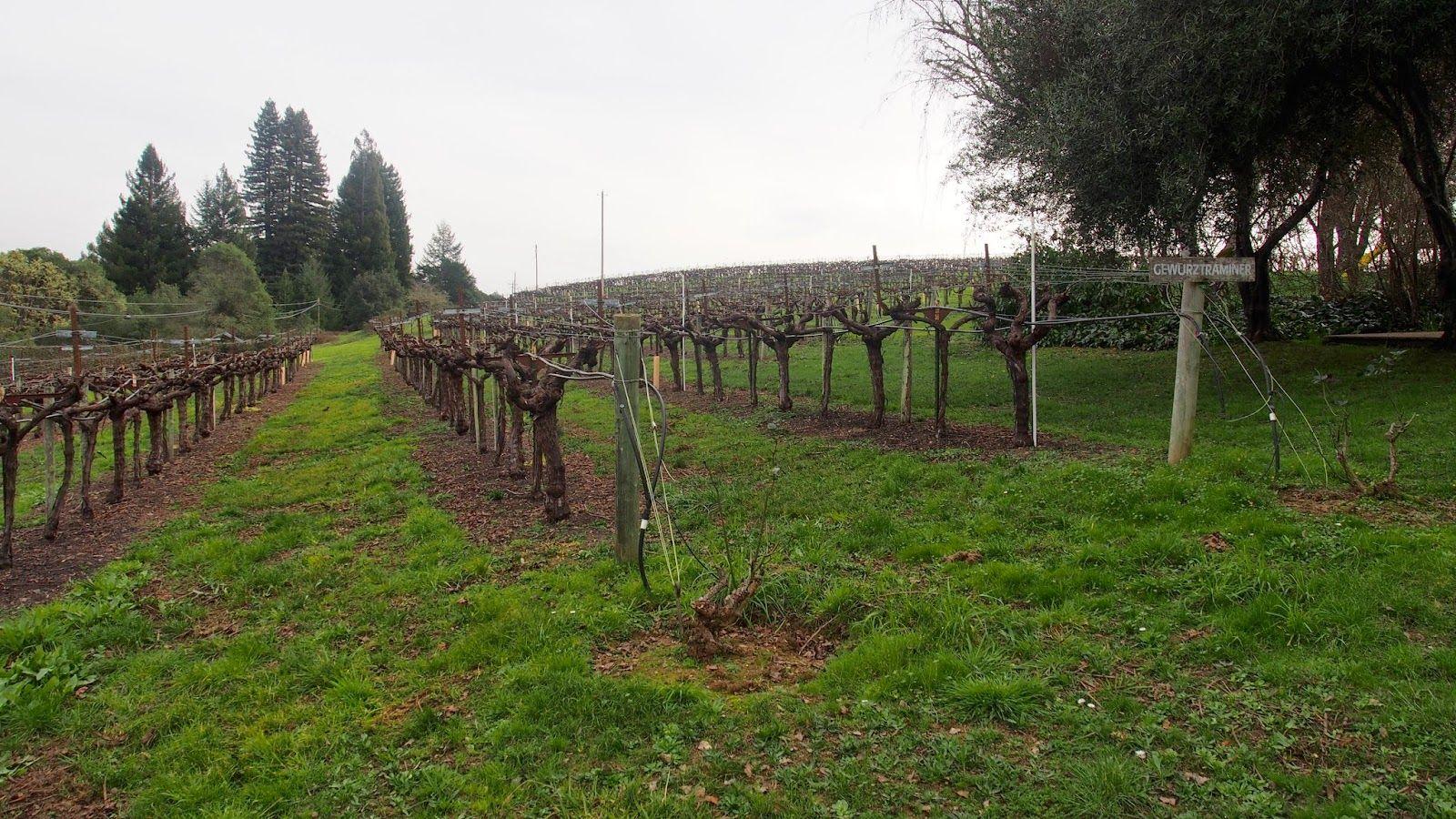 Italian Winestyle: Anderson Valley, California 2015