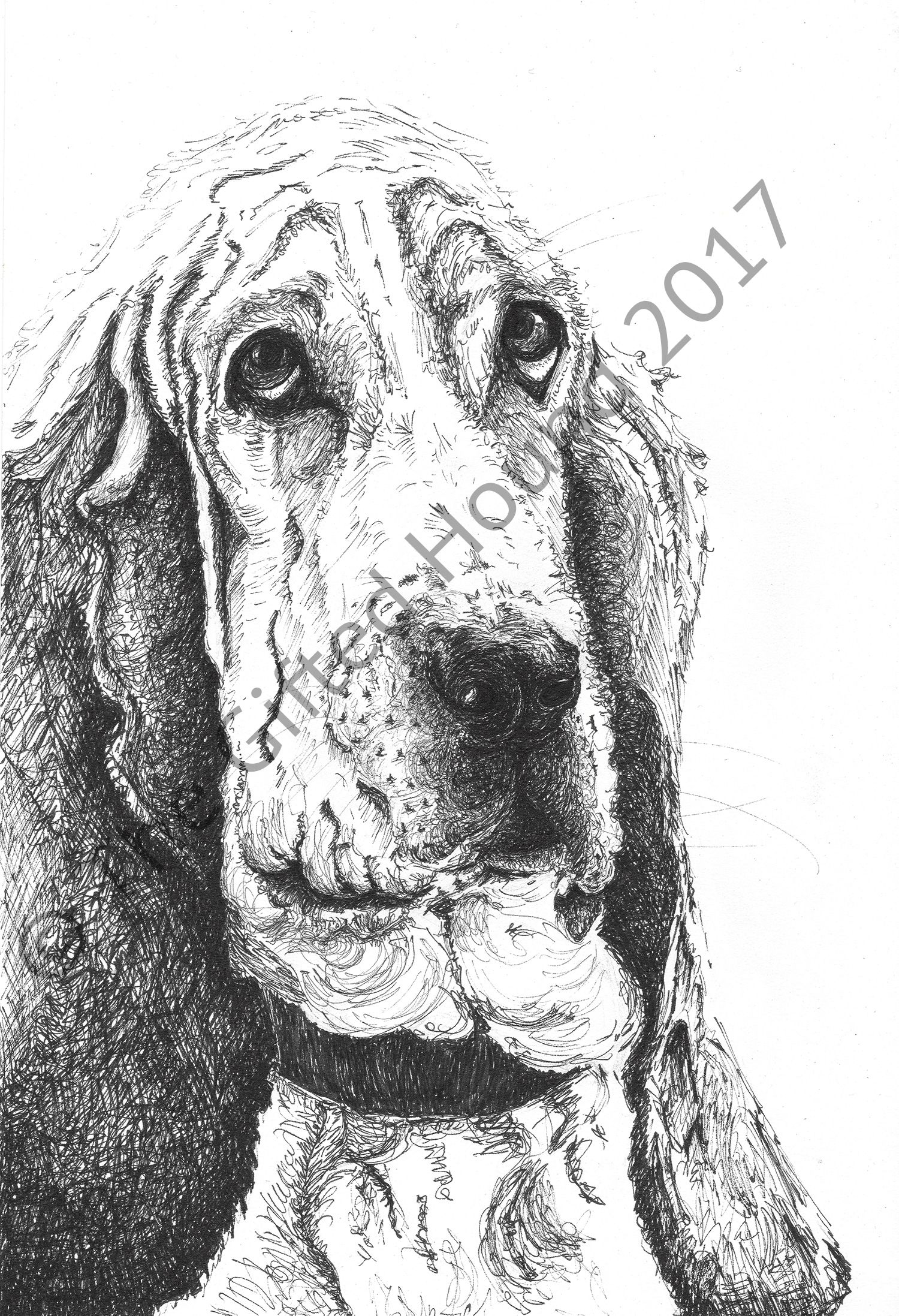 Bassett Hound, pen and ink drawing | Project | Pinterest | Bassett hound