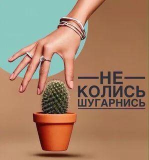 шугаринг: 14 тыс изображений найдено в Яндекс.Картинках ...