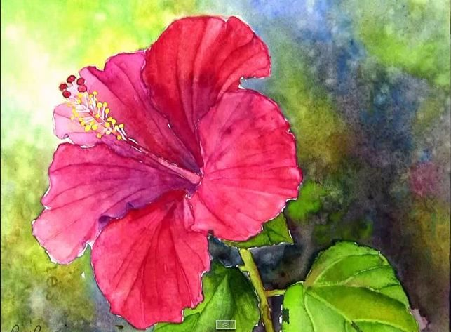 How To Paint A Red Hibiscus Flower In Watercolor P1 Https Www Youtube Com Watch V Ji4w5evzqu Watercolor Flowers Watercolor Flowers Paintings Flower Painting