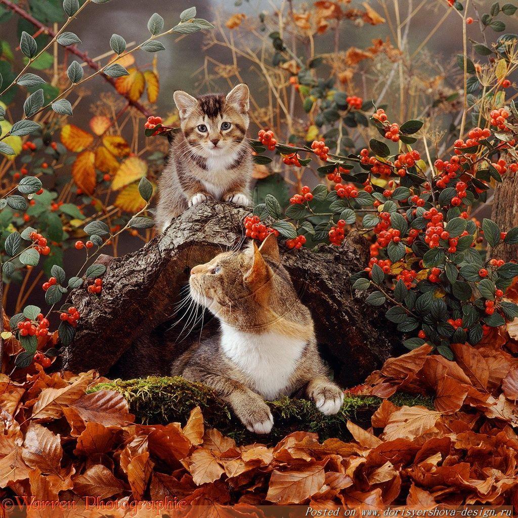 доброе утро картинки с котом осень вдруг