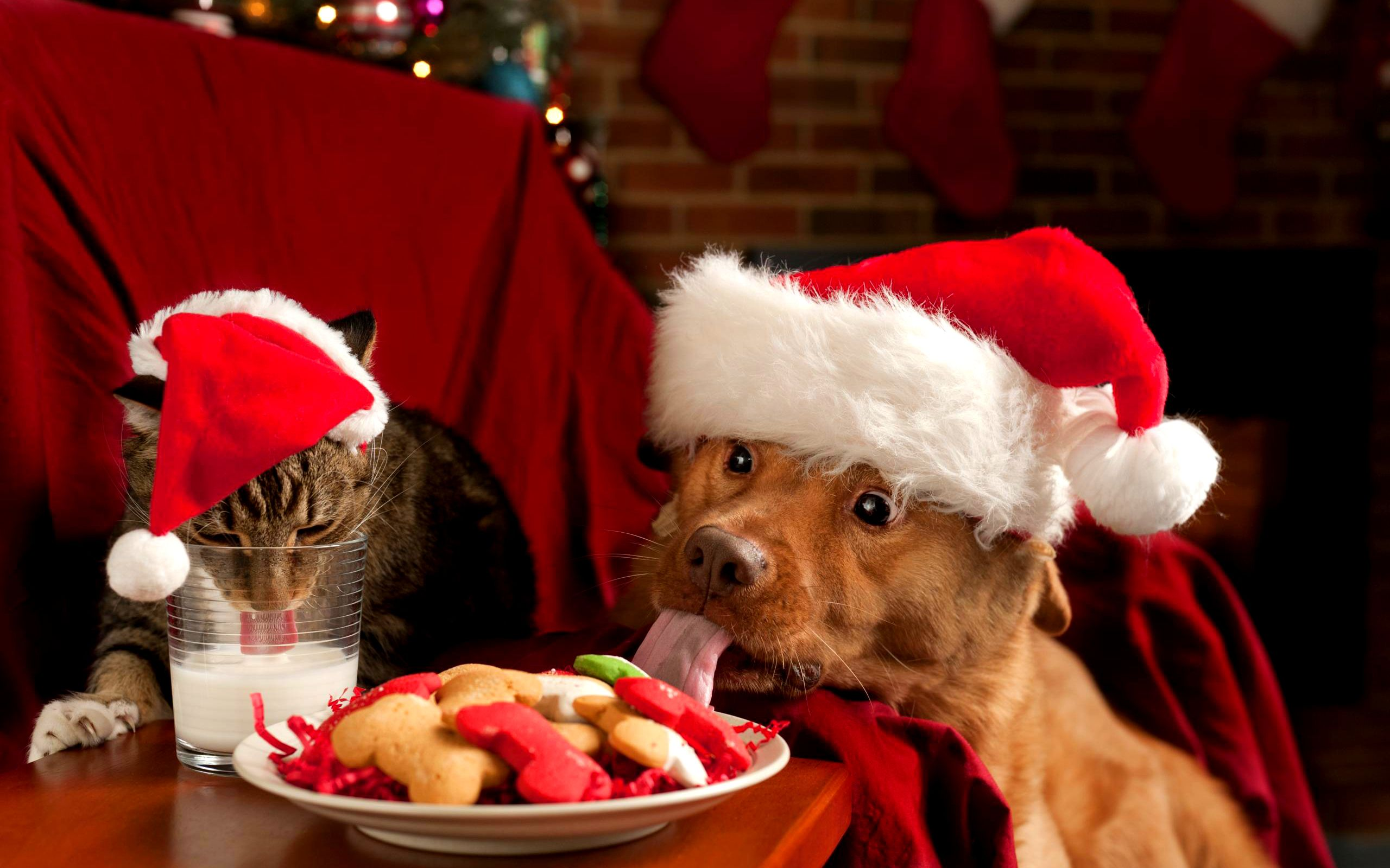 Christmas Puppies And Kittens Wallpaper These Wallpaper Backgrounds Are Free To Download And Available In Dog Christmas Photos Christmas Puppy Christmas Cats