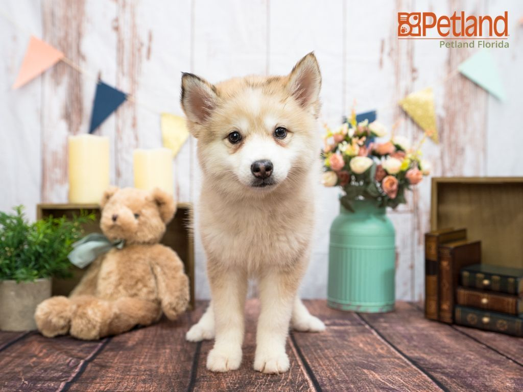 Puppies For Sale In 2020 Puppy Friends Puppies Cute