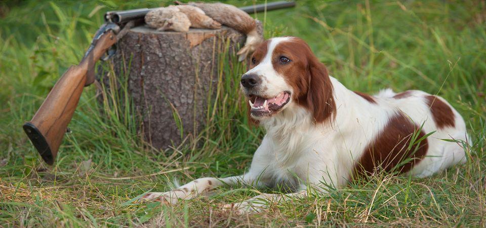 Upland Hunting Dog Jpg 960 450 Pixels Bird Dog Training Dog