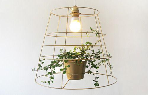Hanging lamp + plant