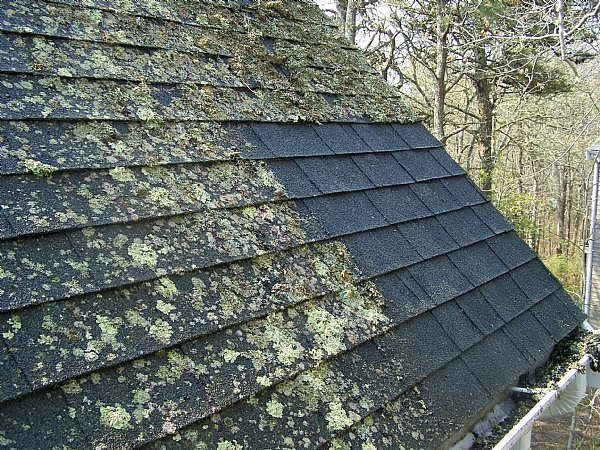 How To Remove Roof Moss Ehow Cleaning Hacks House Cleaning Tips Cleaning Painted Walls
