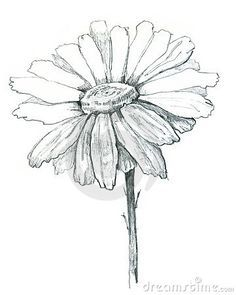 Simple Daisy Drawing How To Draw A Flower Image Search Results White Flower Tattoos Daisy Drawing Daisy Tattoo Designs