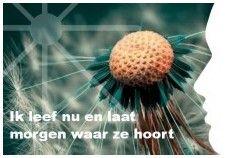ConFront.nl