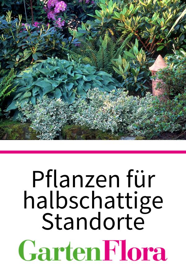Halbschatten Pflanzen Wenig Licht Ist Mehr Gartenflora In 2021 Pflanzen Halbschatten Pflanzen Garten Pflanzen