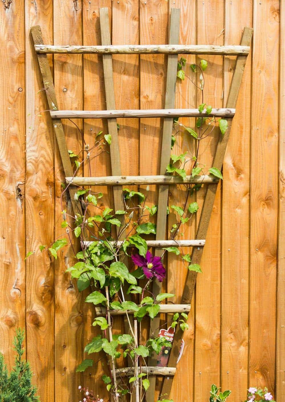 Outdoor Fan Trellis In Your Garden | Gardens and Plants