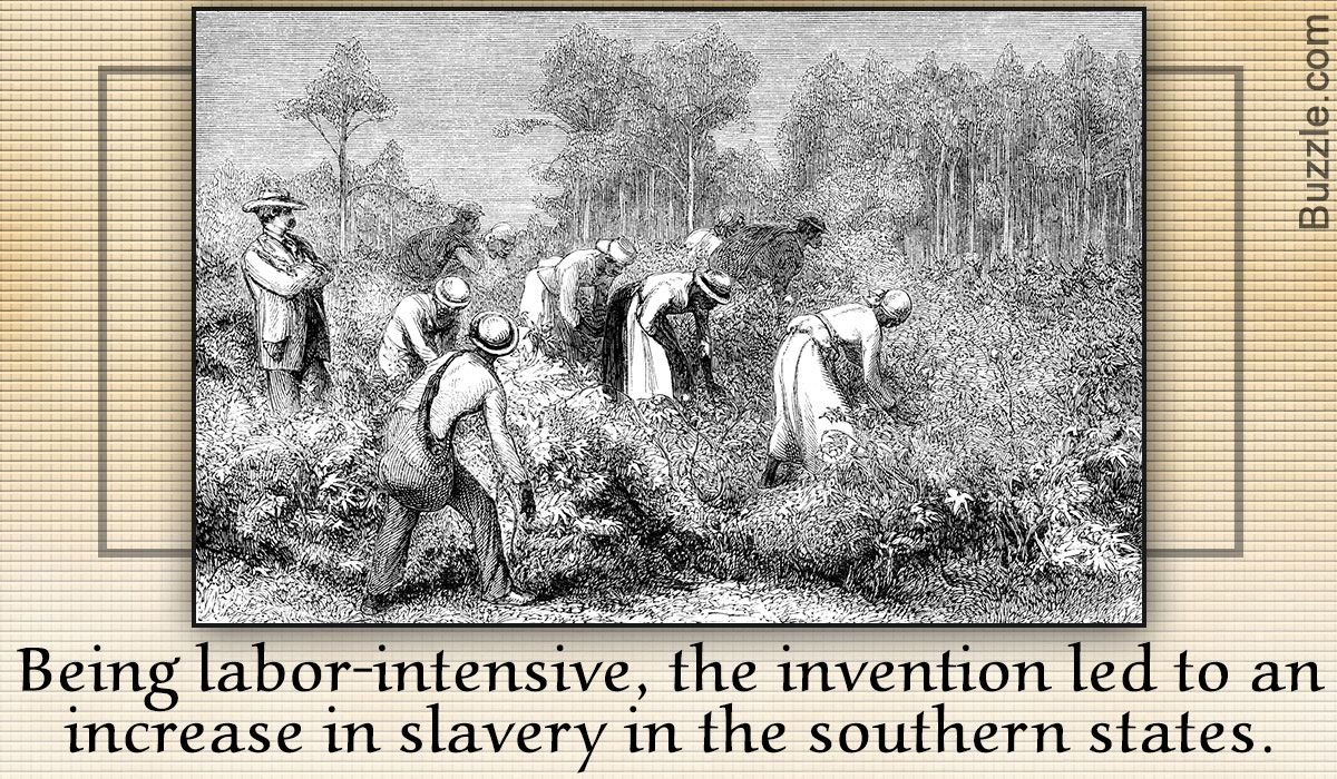 Amazing Cotton Gin Facts An Interesting Piece Of History Here