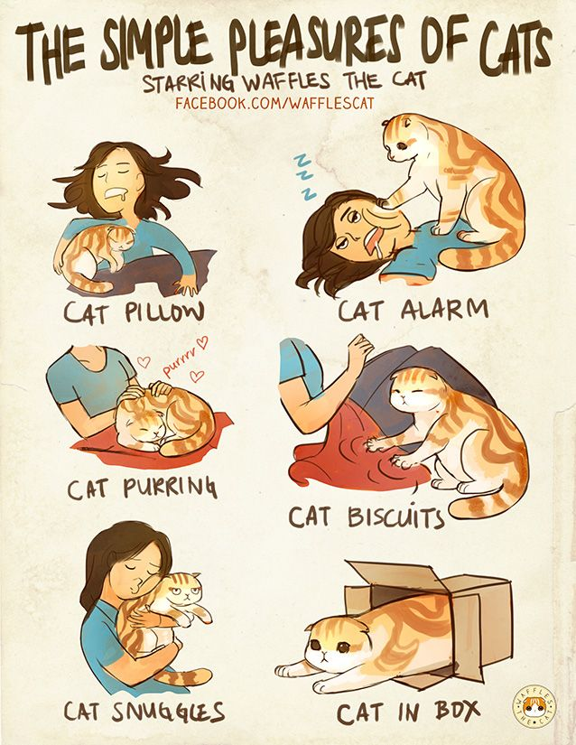 Simple pleasures of owning a cat.  As a pillow!  Alarm clock!  For snuggles!  From Laine's Art Blog.