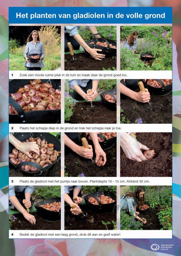 bol in pot planten - Google zoeken