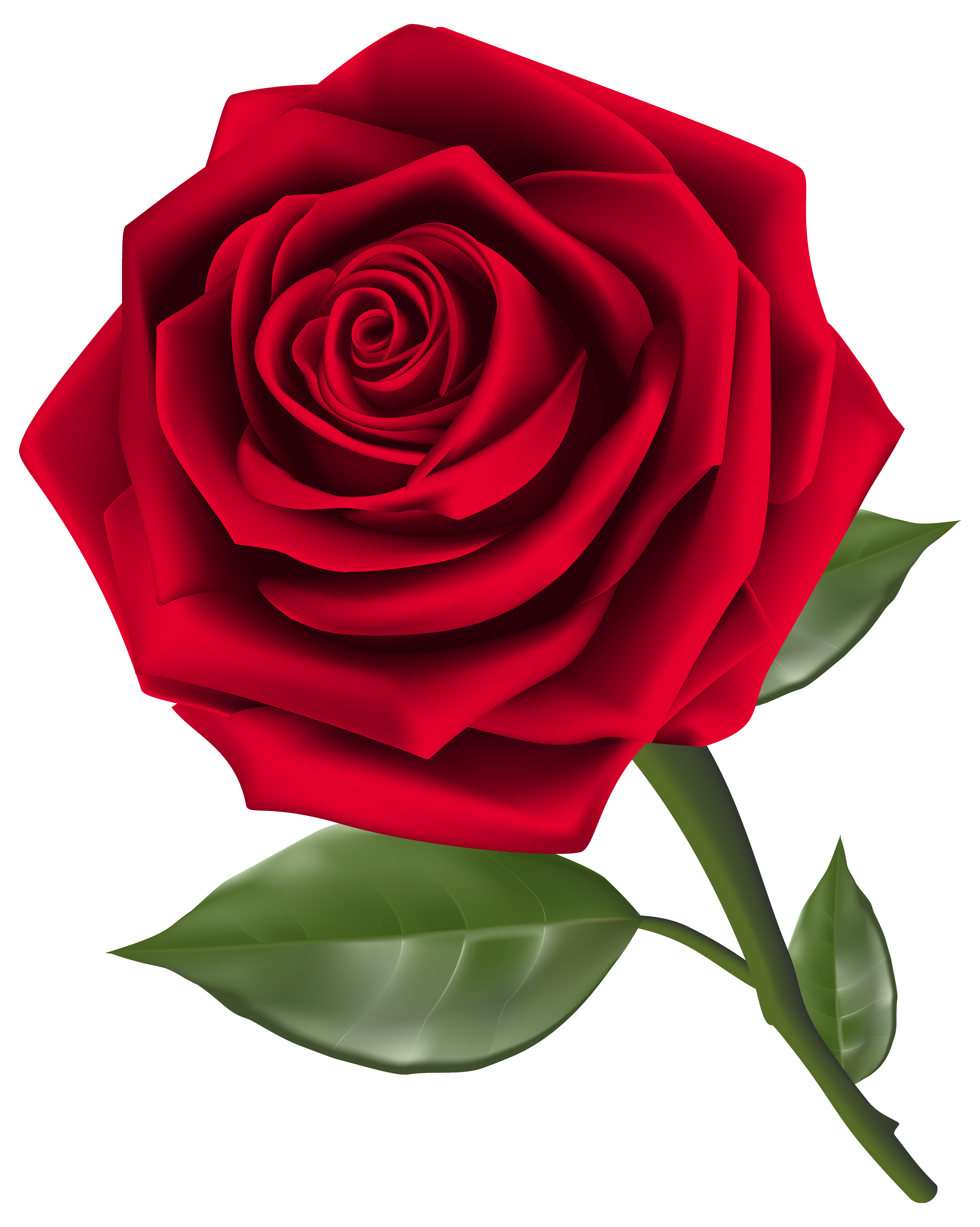 Red Rose Clip Art - Synkee