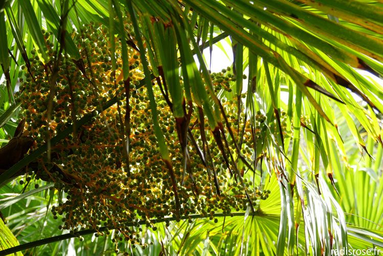 Le Jardin Botanique De Vauville Dans Le Cap Cotentin Feuilles De
