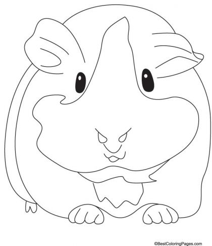 Groaning Guinea Pig Coloring Pages Download Free Groaning Guinea
