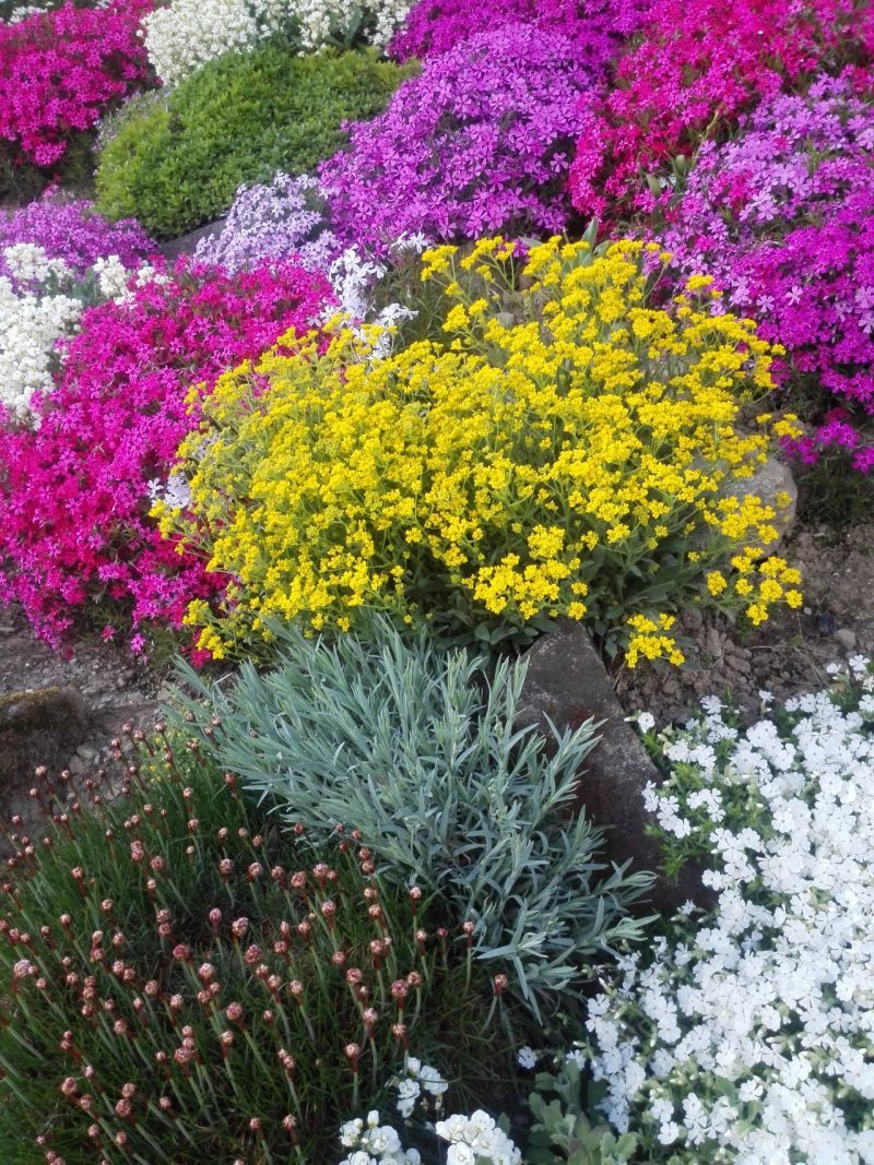 Helene Taha Na 80 Ku No Na Toto Neda Dopustit Kazdy Kto Prejde Okolo Jej Domu Len Otvara Usta Garden Design Flowers Plants