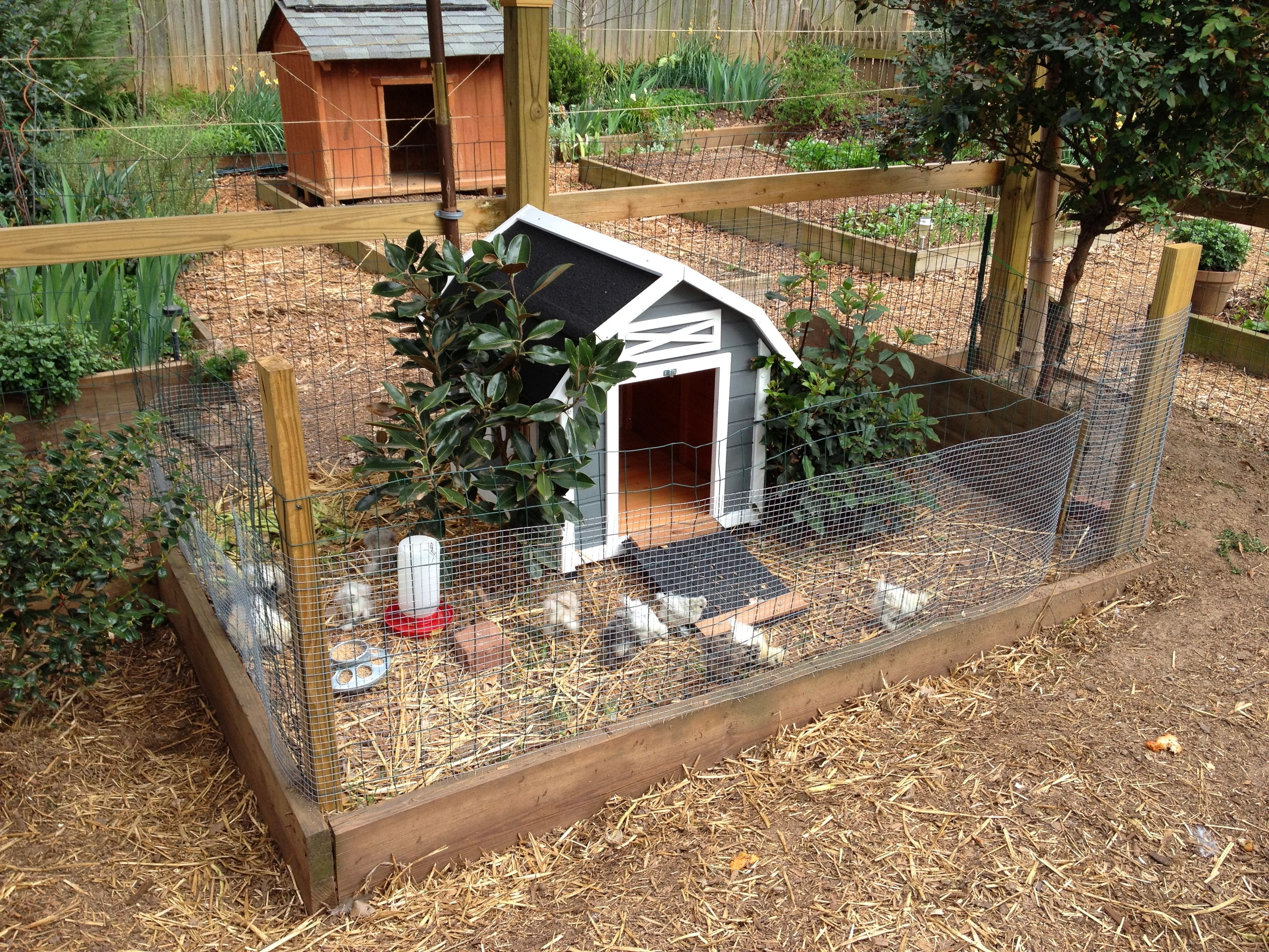 My little silkie coop coops farming and chicken coup for How to build a duck pen house