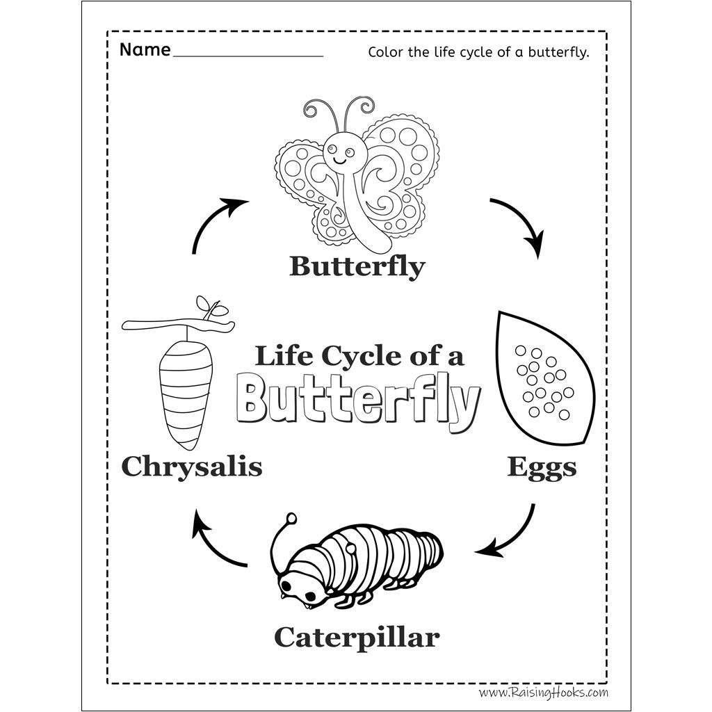 Life Cycle Of A Butterfly Worksheet Raising Hooks Life Cycles Butterfly Life Cycle Activity Butterfly Life Cycle [ 1024 x 1024 Pixel ]