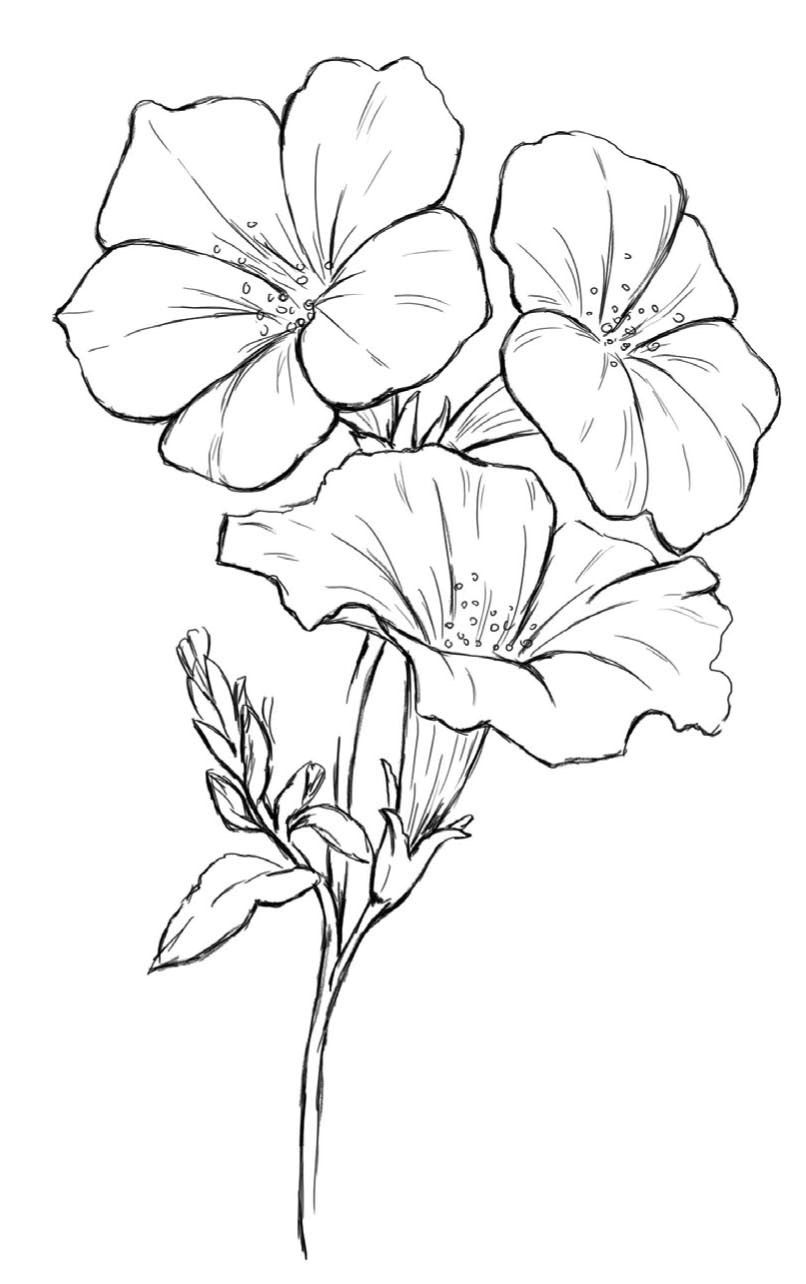 Pin By Alison Mcmillan On Coloring Pages Flower Sketch Pencil