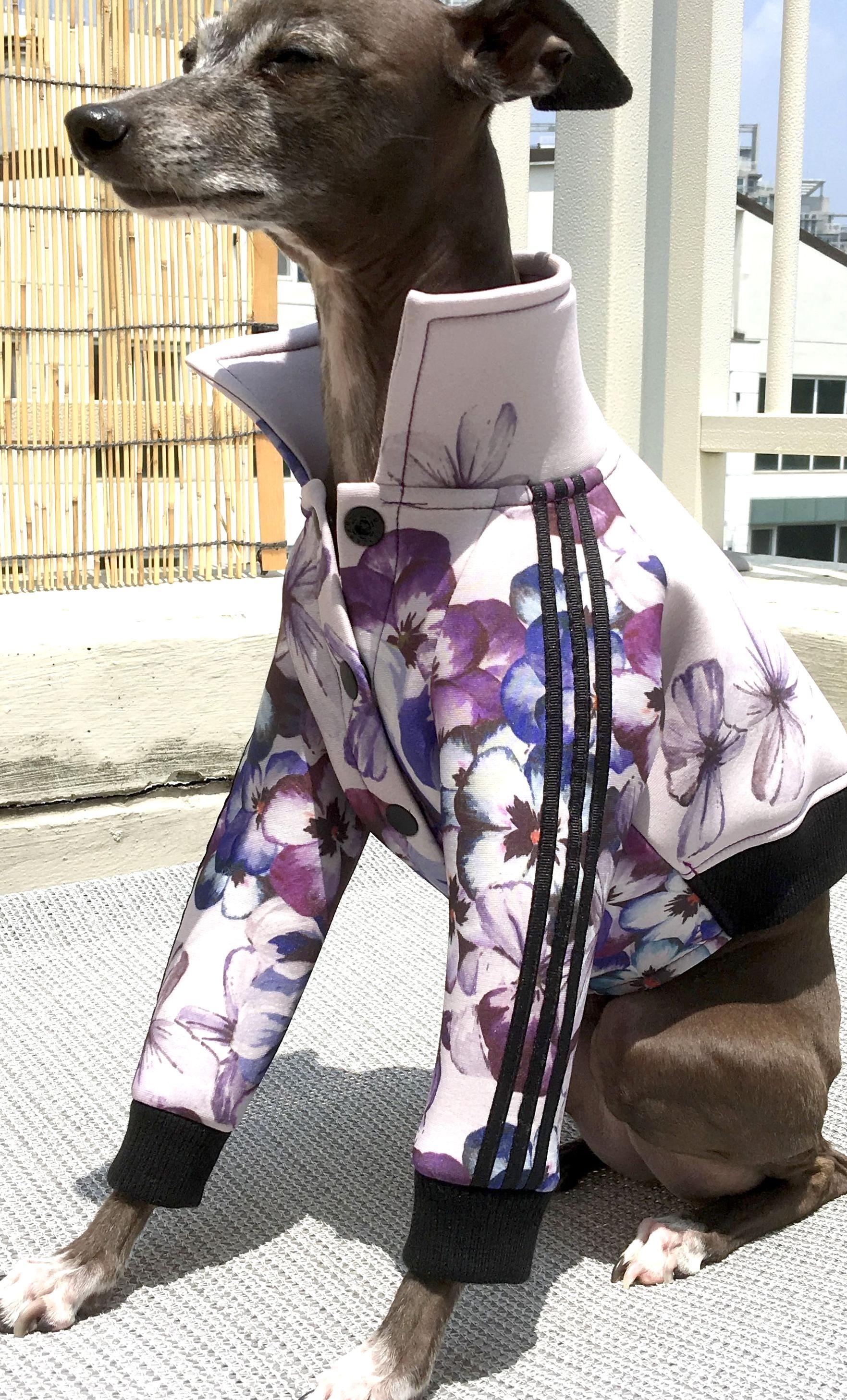 taliangreyhound wear adidas jersey jacket DO NOT COPY